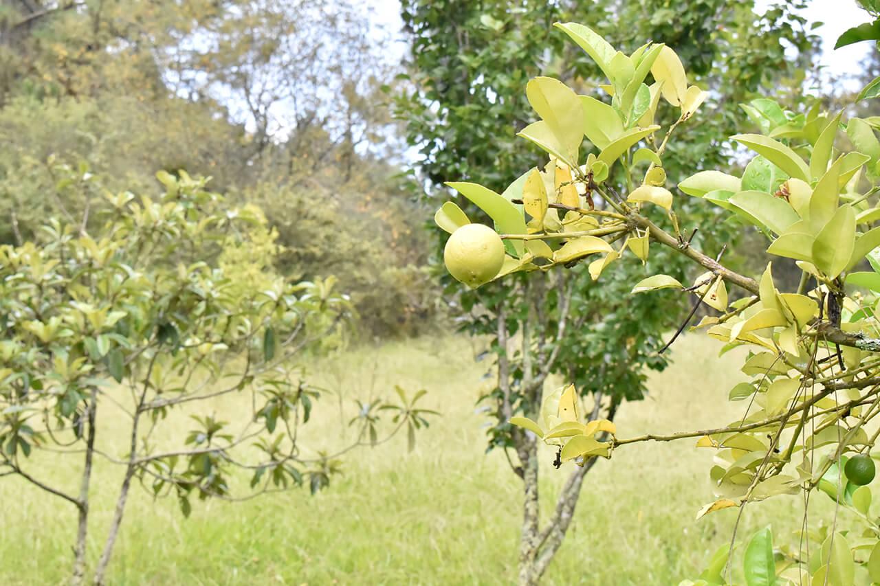 Parque-la-Planta-Image3_Huerto-2