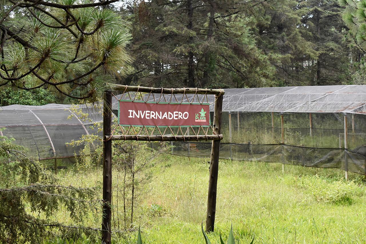 Parque-la-Planta-Image3_Invernadero-1
