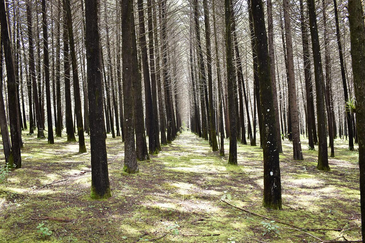 Parque-la-Planta-Image6_Bosque-3