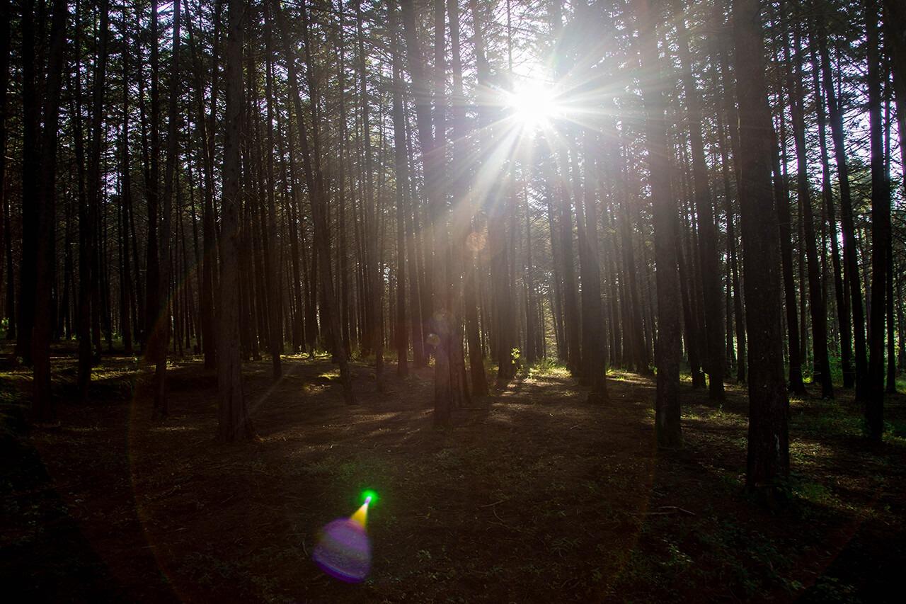 Parque-la-Planta-Image6_Bosque-5